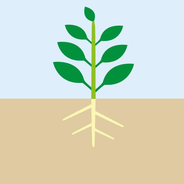 慣行栽培の見た目のイメージ