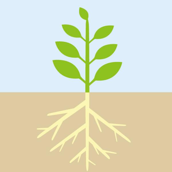 自然栽培の見た目のイメージ