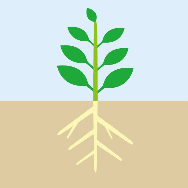 特別栽培農産物の見た目のイメージ